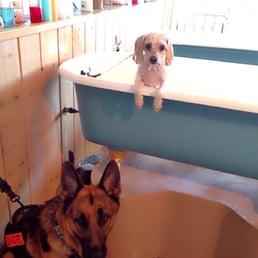 Dirty Dog Wash Huntington Beach