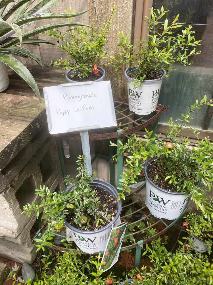 Reminiscent Herb Farm Nursery & Landscaping: 1344 Boone Aire Rd, Florence, KY