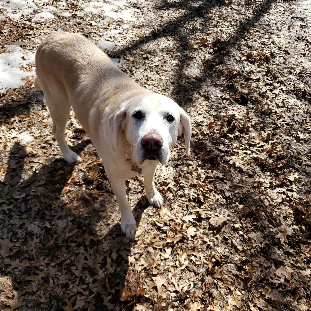 Neeter's Pet Sitting: 22531 Jewell St NE, East Bethel, MN