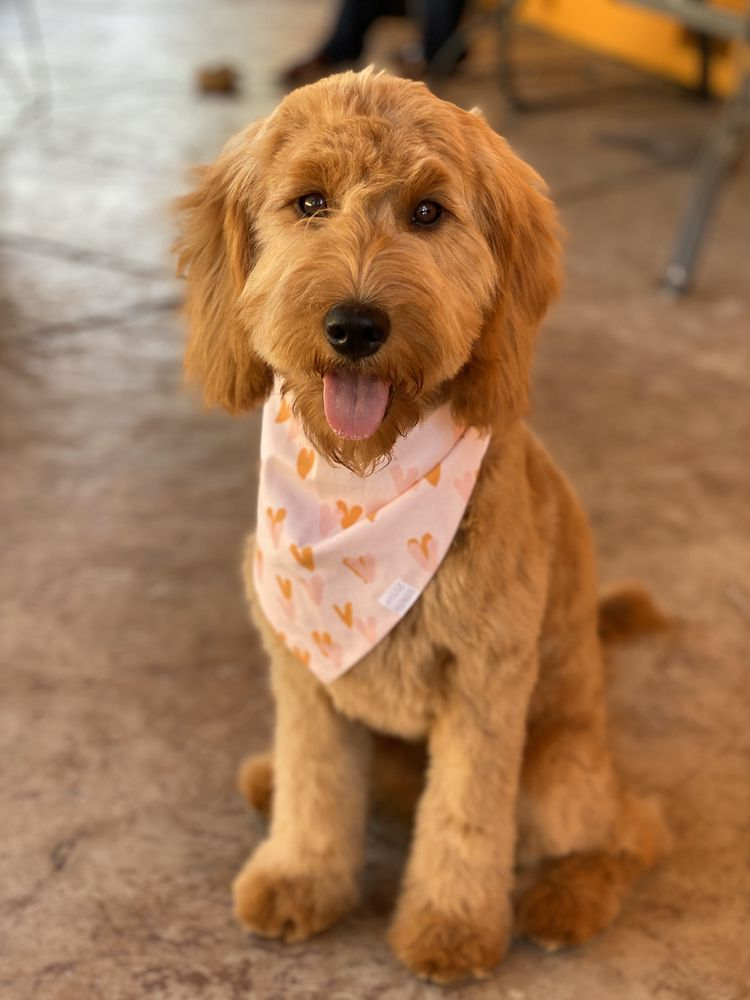 Bubbly Bulldog Grooming: 949 Grant St, Benicia, CA
