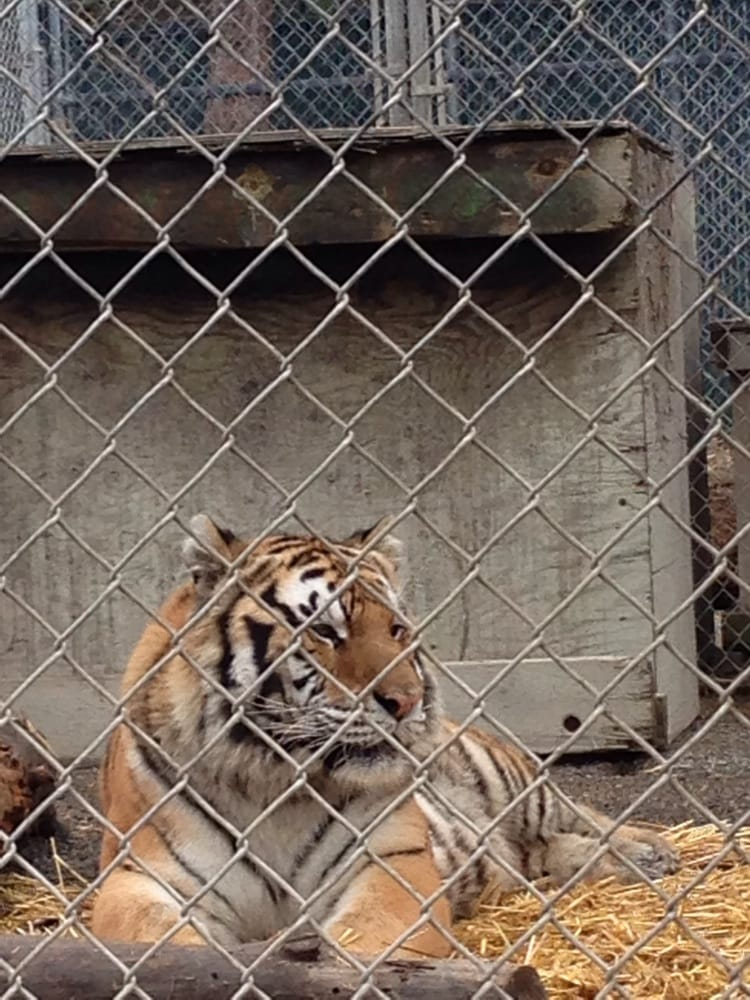 Cat Tales Zoological Park Reviews