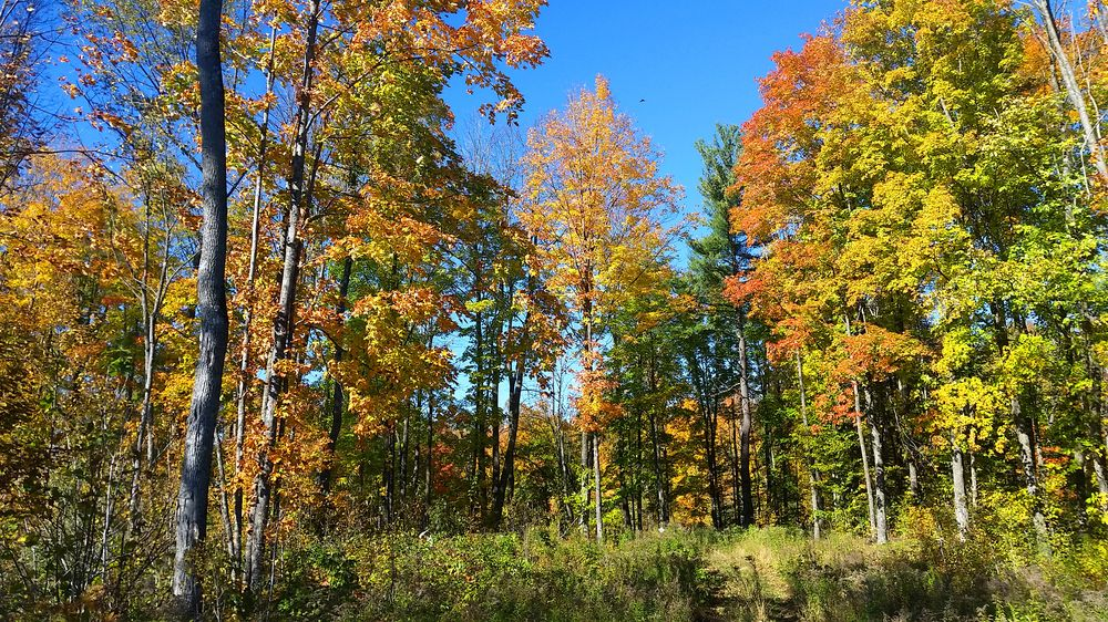 Mc Clintock County Park: Parkway Rd, Athelstane, WI