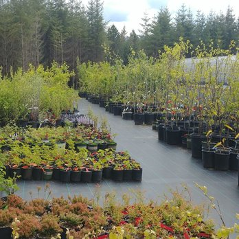 Photo Of Harvest Nursery Molalla Or United States My Favorite
