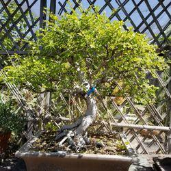 Photo Of Nee Hai Bonsai Fresno Ca United States Interesting