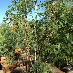 Photo Of Green Desert Whole Tree Nursery Indio Ca United States