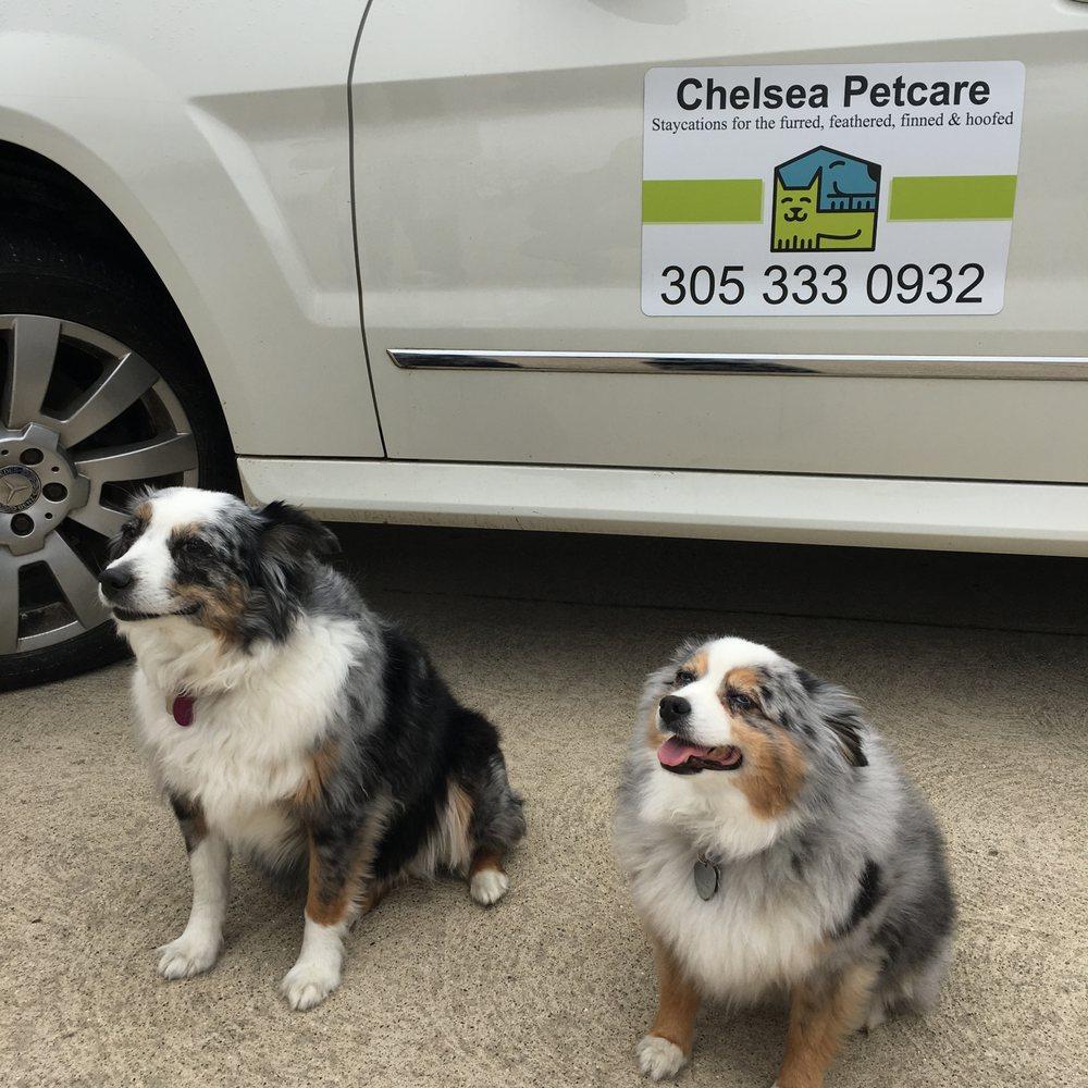 Chelsea Petcare: Chelsea, MI