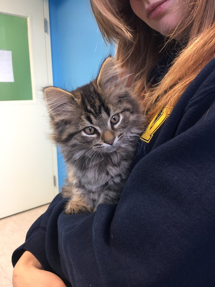 Little Traverse Bay Humane Society: 1300 W Conway Rd, Harbor Springs, MI