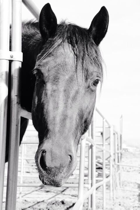 Desert Mountain Equestrian: 8460 S Forester St, Las Vegas, NV