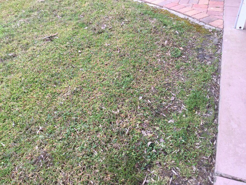 Crescent Termite & Pest Control Inc: 241 S Summit St, Crescent City, FL