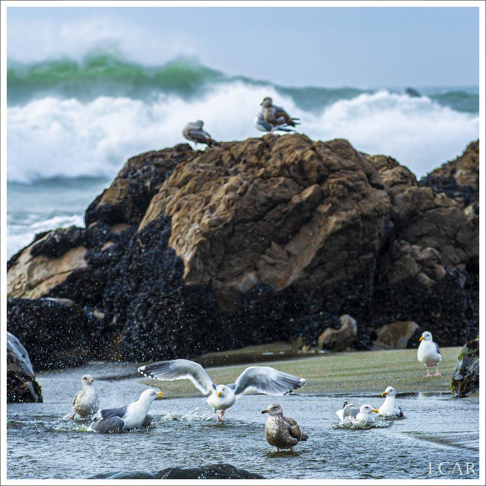 Sonoma Coast State Beach - Salmon Creek: Bodega Bay, CA