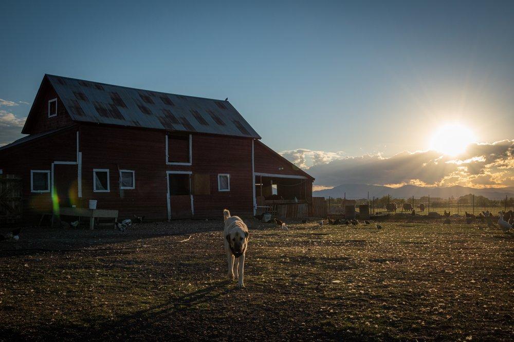 Oddfellow Inn & Farm: 2245 Head Ln, Helena, MT