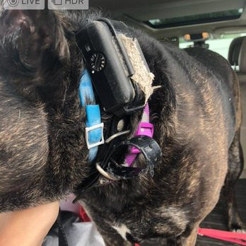 Buddy's Doggie Daycare, Grooming & Boarding - 29 Photos