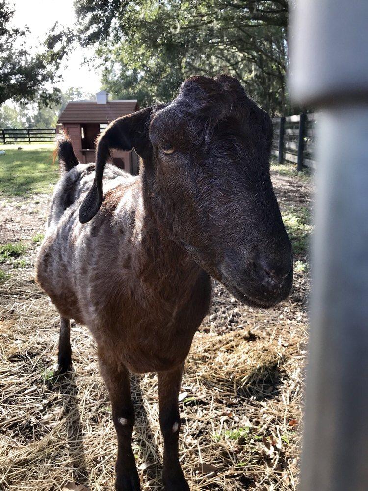 McCleery Equine Veterinary Service: Archer, FL