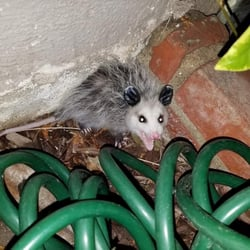 A&M Animal Control - 13 Photos & 35 Reviews - Pest Control