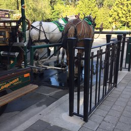 Photos for Stanley Park Horse-Drawn Tours - Yelp