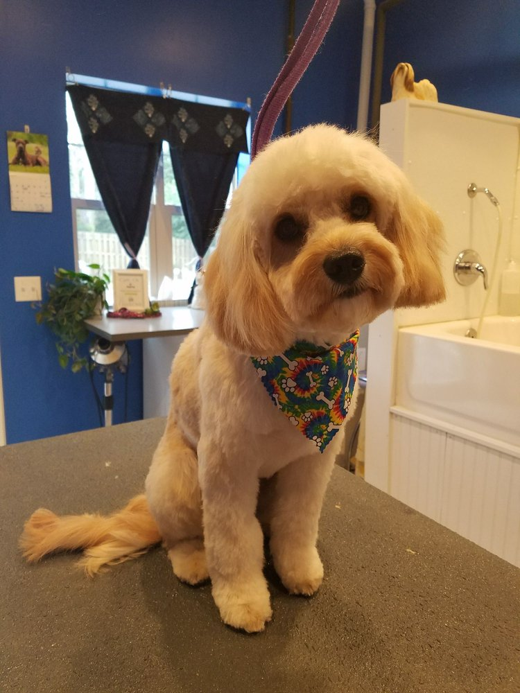 Personal Dog Grooming By Ruth: 34121 US Rt 45, Grayslake, IL