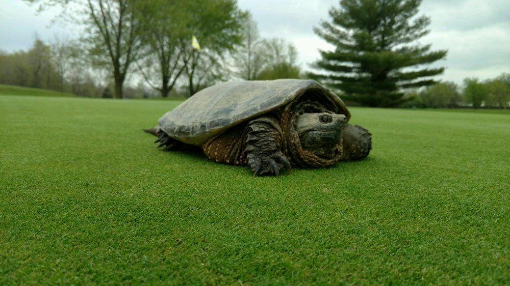 Woussickett Golf Course: 6311 Mason Rd, Sandusky, OH
