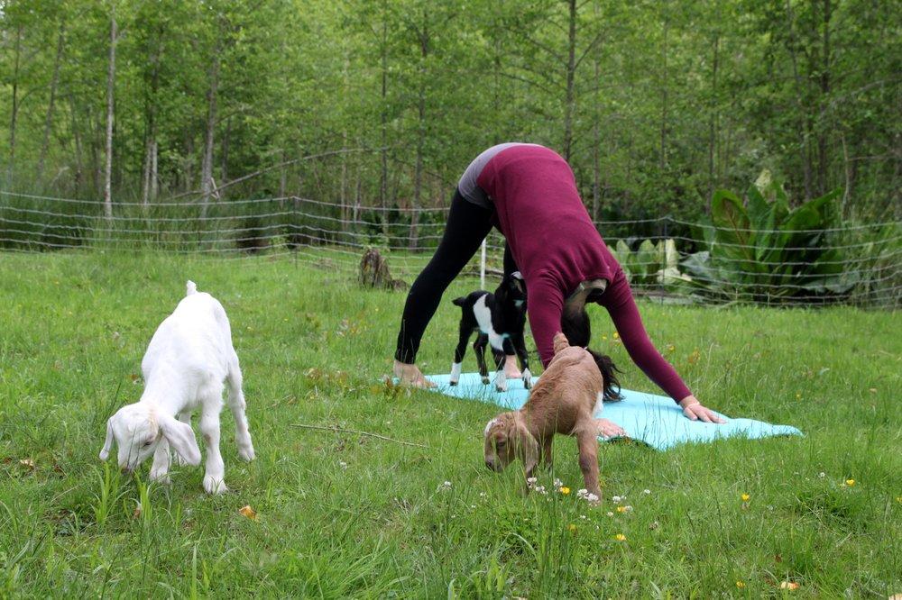 Goat Boat Farm: Acme, WA