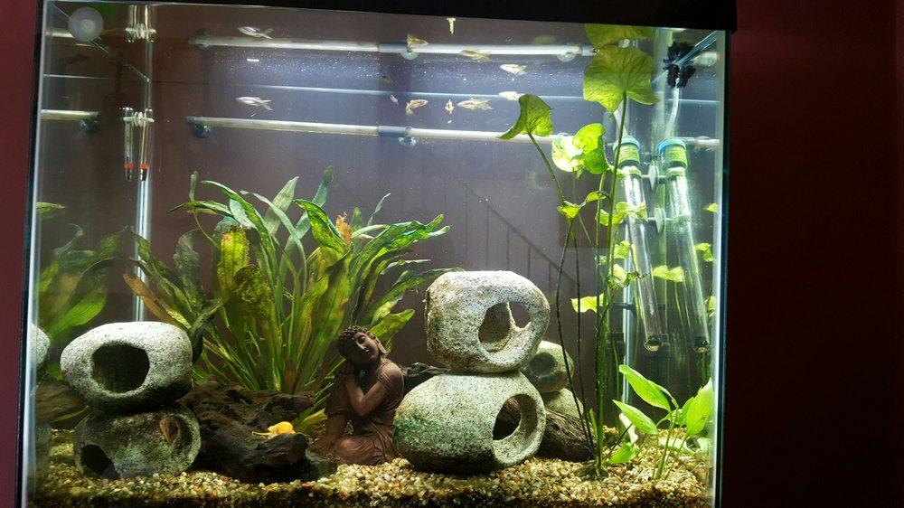 Quantum Reefs: 7025 Brookfield Plz, Springfield, VA