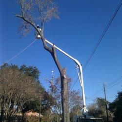 Photo Of Gilbert S Tree Service Houston Tx United States