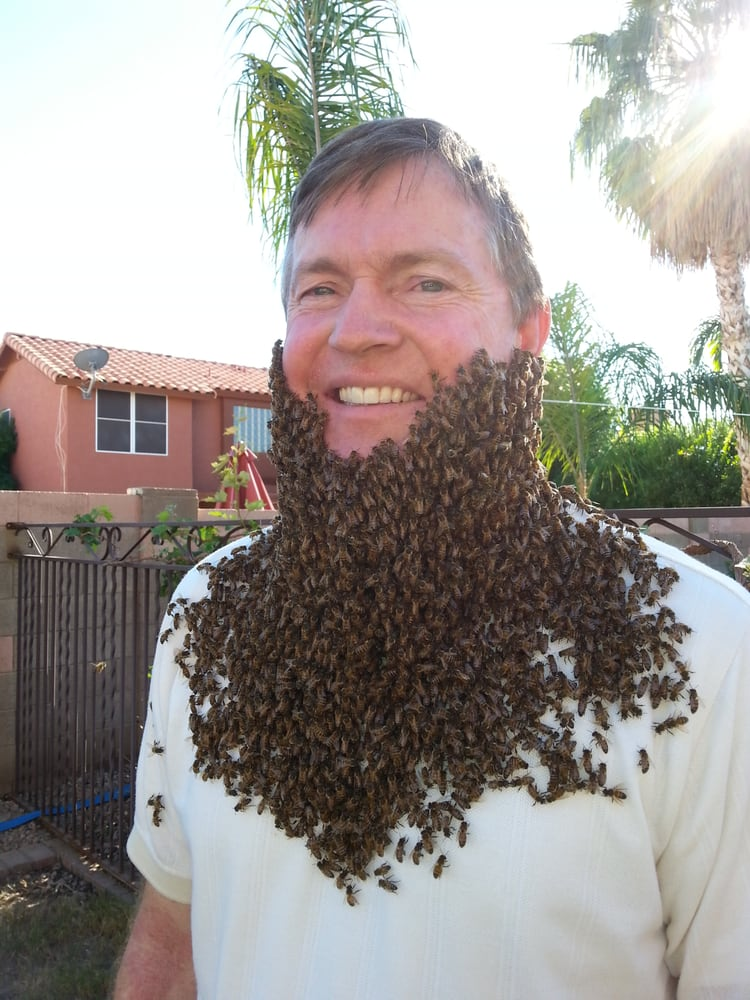 The Beehive Bee and Wasp Removal: 1852 E Bruce Ave, Gilbert, AZ