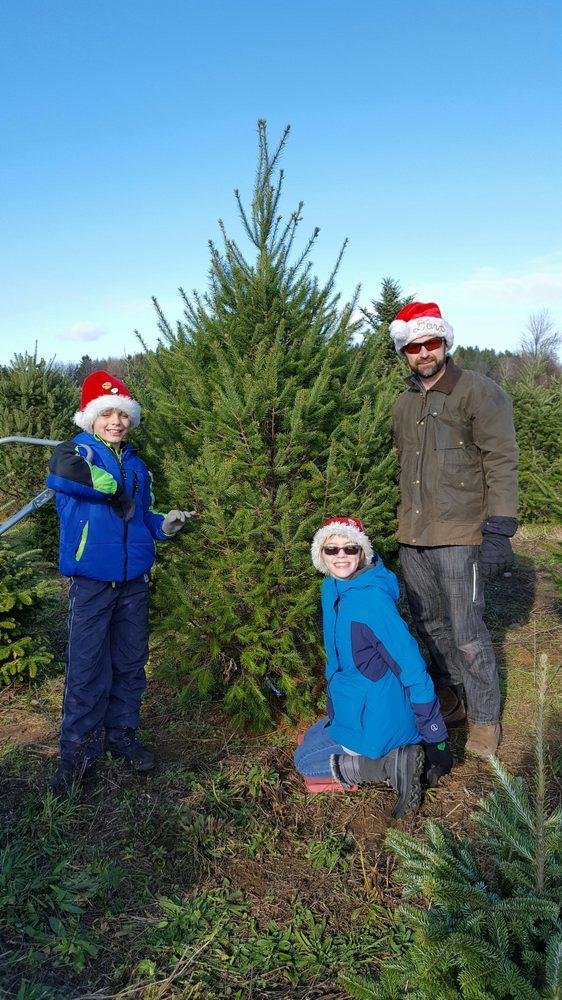 Country Pines Christmas Tree Farm - Christmas Trees - 2481 ...