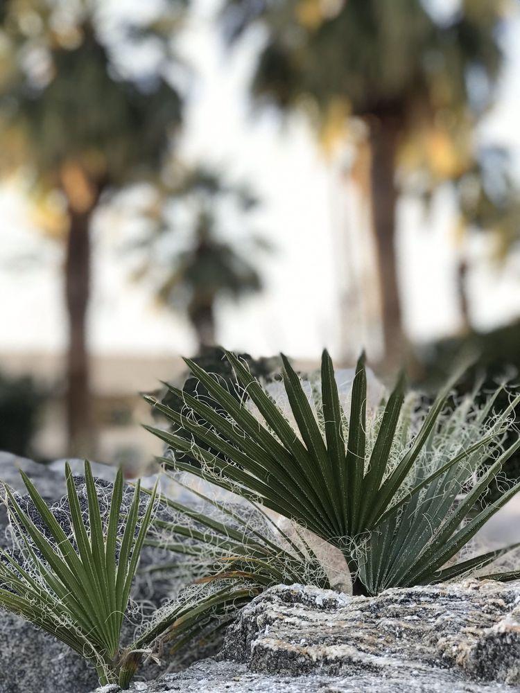 Miracle Springs Resort & Spa: 10625 Palm Dr, Desert Hot Springs, CA