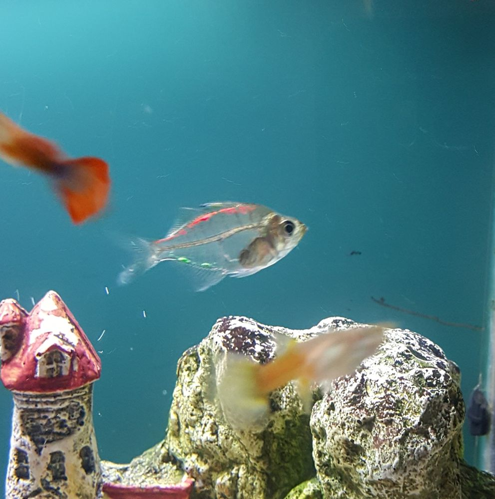 Fish aquarium in downtown toronto - Downtown Pets Aquarium 10 Reviews Pet Stores 280 Avenue Spadina Chinatown Toronto On Phone Number Yelp