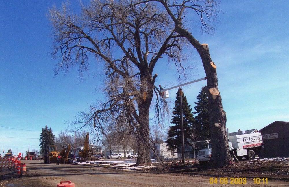 Pro Tree Service: 3700 W 90th St, Sioux Falls, SD
