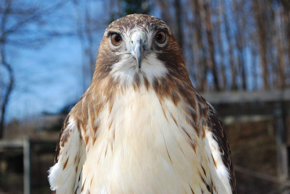 Kellogg Bird Sanctuary: 12685 E C Ave, Augusta, MI