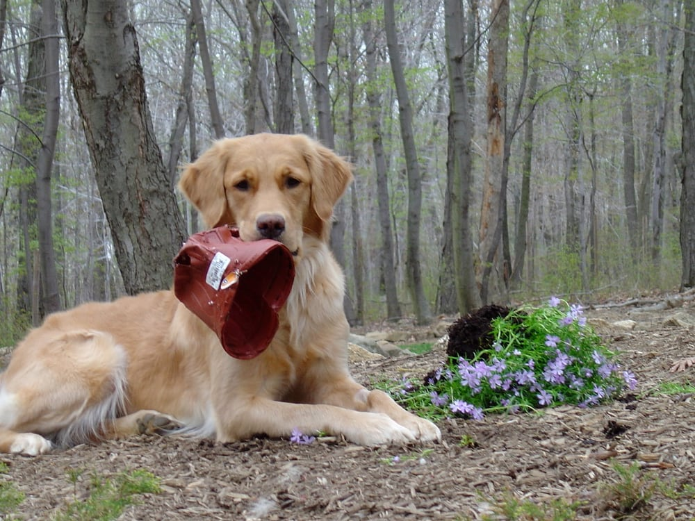 NJ Fix My Dog: Morristown, NJ