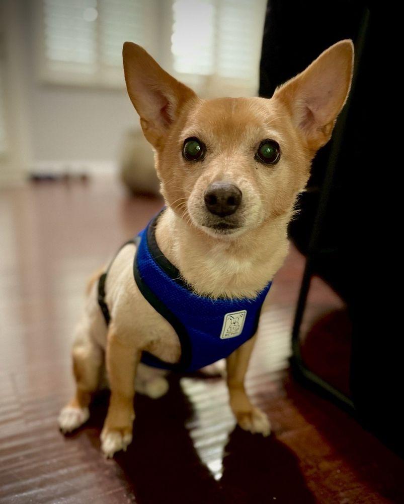 Fetch! Pet Care of Santa Clarita