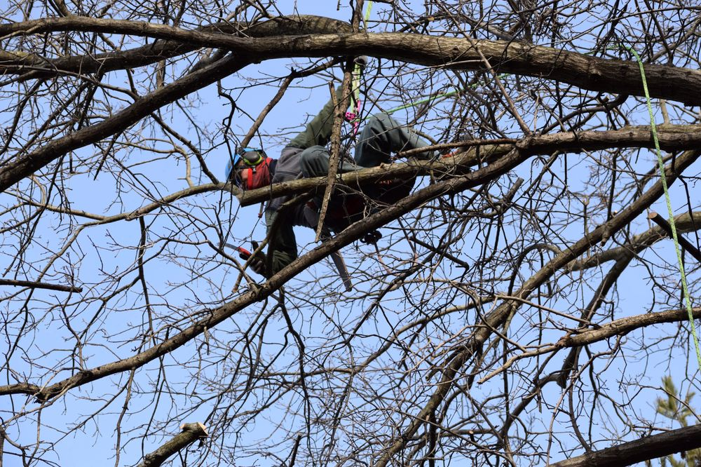 Ward John B & Co Tree Experts: Http//wwwjohnbwardcom, Bryn Mawr, PA