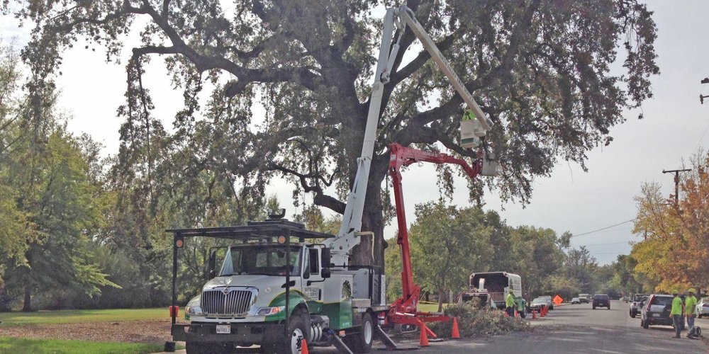 North Valley Tree Service: 3882 Esplanade, Chico, CA