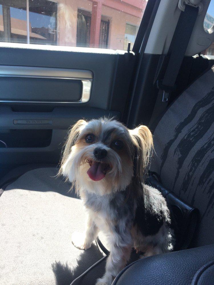 Photo of Best Dog Pet Grooming: Parker, AZ