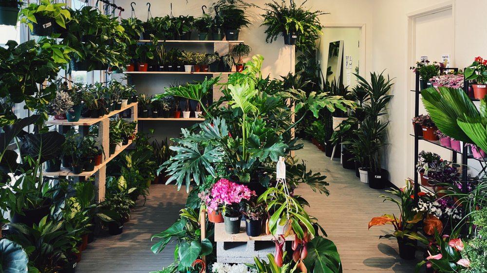 Urban Rooted Plant Shop: 14780 Wicks Blvd, San Leandro, CA