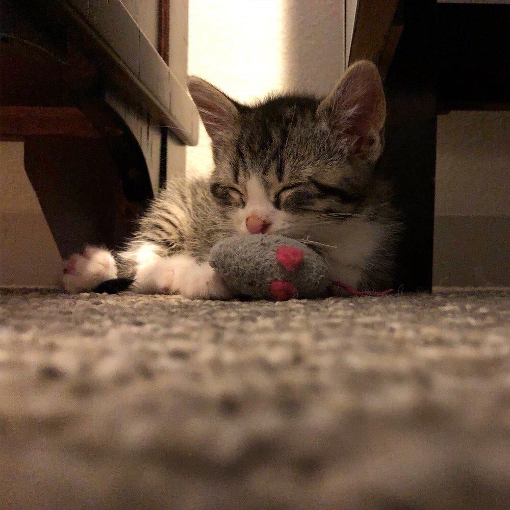Austin Cat Sitters