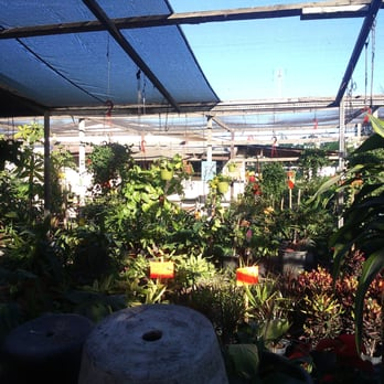 Vivero la central viveros y jardiner a blvd lazaro for Vivero casa jardin