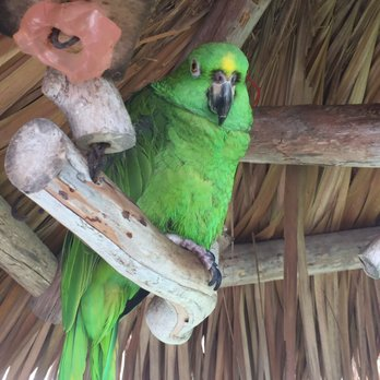 Photo Of Best Western Plus Beach Resort Fort Myers Fl United States