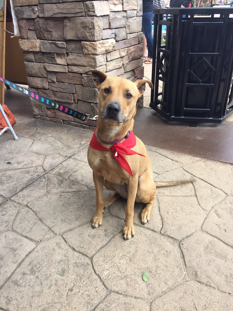 Service Dog Training Roseville Ca