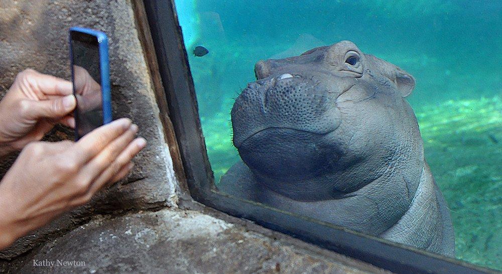Cincinnati Zoo: 3400 Vine St, Cincinnati, OH