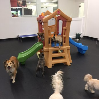 Mike n 39 s reviews studio city yelp for Dog hotels los angeles