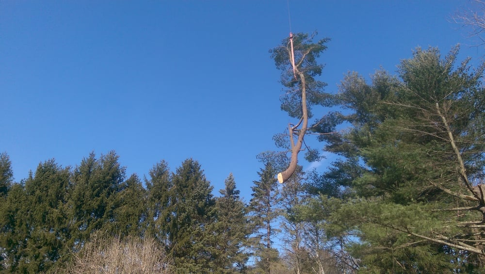 Community Tree Service 12 Photos Services 163 Billerica Rd Chelmsford Ma Phone Number Last Updated December 2018 Yelp