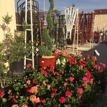Star Nursery Nurseries Gardening 34 Photos 26 Reviews