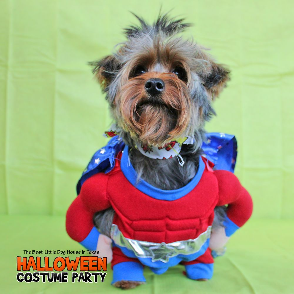 Teddy halloween 2016 yelp for Best little dog house in texas