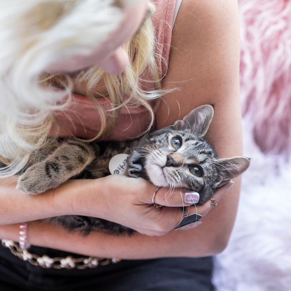 Crumbs & Whiskers - Kitten & Cat Cafe