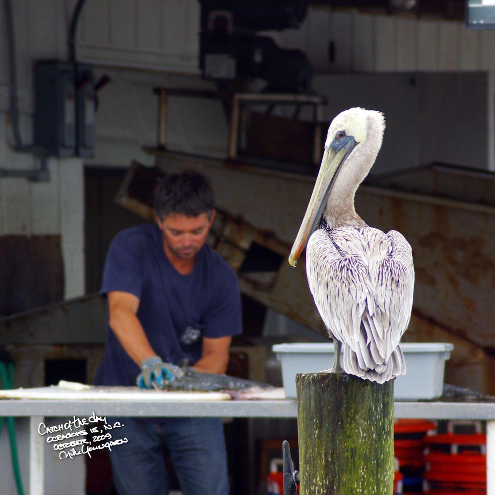 Ocracoke Fish