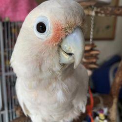 Golden Cockatoo - 86 Photos & 39 Reviews - Bird Shops - 360 S