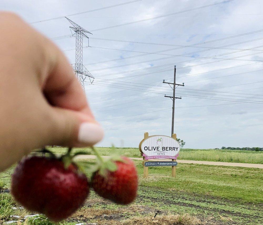 Olive Berry Acres: 2575 W Mine Rd, Mazon, IL