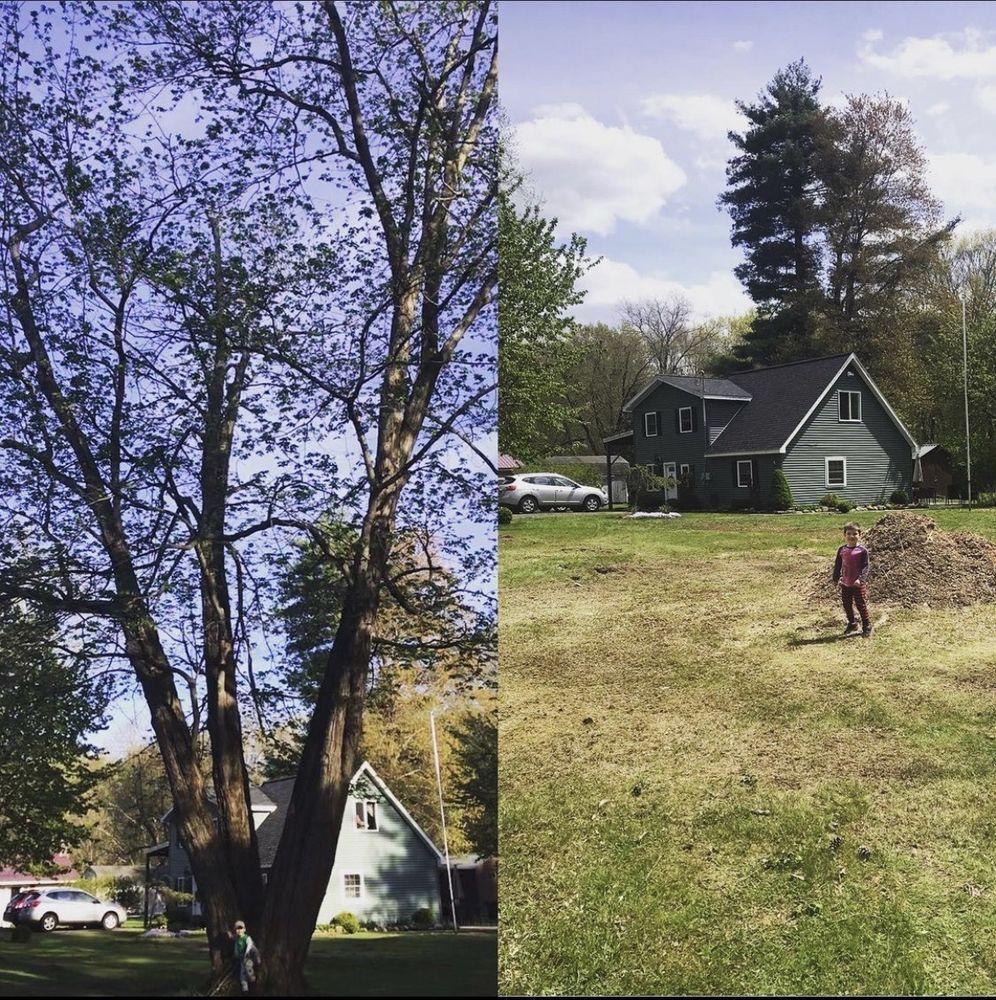 Haslem Tree Svce: 196 Delaware Ave, Delmar, NY